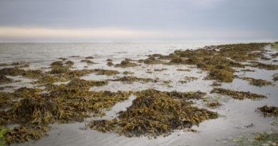 La biologie marine a le vent en poupe